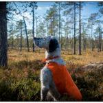 Ännu en dag i skogen